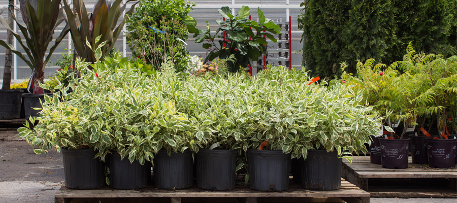 Scheduled_Pick_Article.jpg